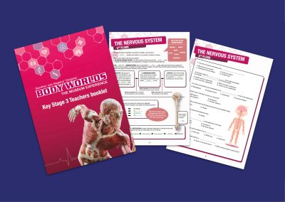 BODY WORLDS London Key Stage 3 Education Pack