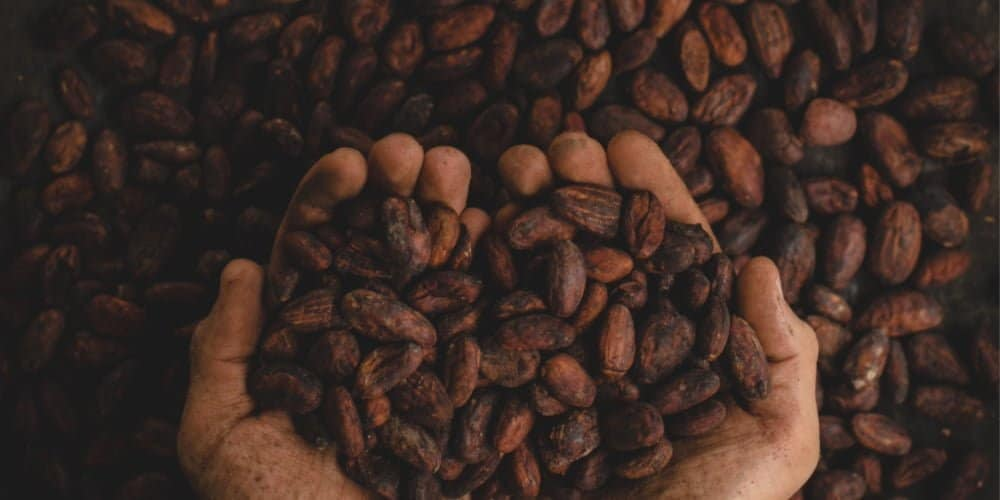 Picture of Cocoa beans