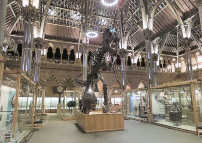 Oxford University Museum of Natural History Virtual Tour Profile Image